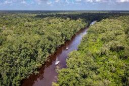 Jungle verslaafd